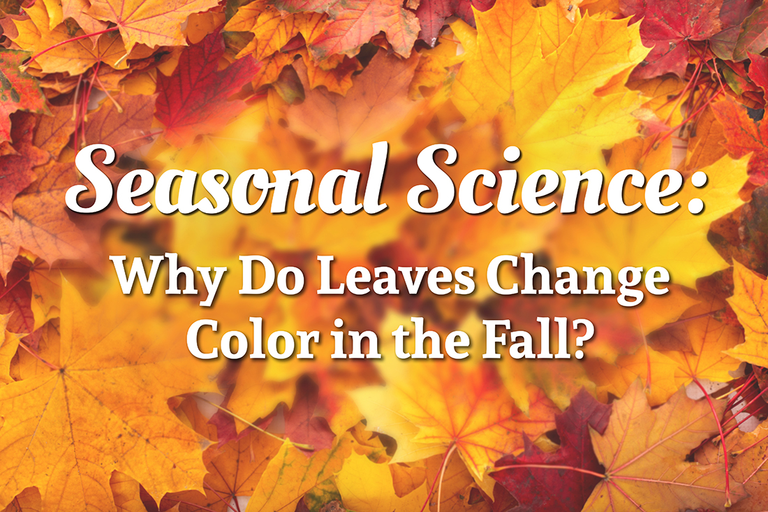 Fall Science Experiment